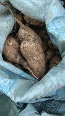 这是一张关于黄心红薯 黄皮 3两~6两的产品图片