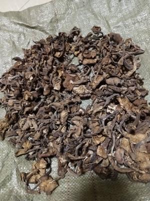 辽宁省丹东市东港市干榛蘑 袋装 1年以上