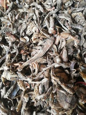 这是一张关于鱼粉的产品图片