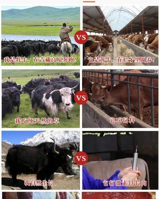 四川省甘孜藏族自治州康定县藏族牦牛肉 生肉