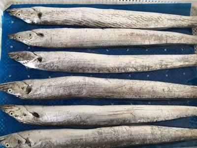 黑龙江省牡丹江市爱民区野生带鱼 野生 0.5公斤以下