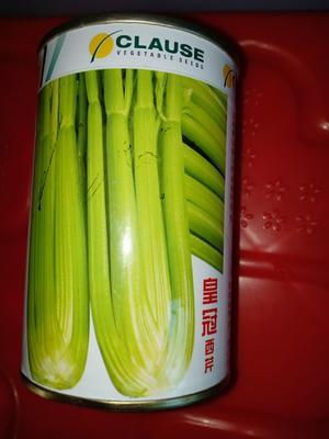 这是一张关于西芹种子的产品图片