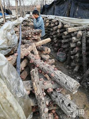 河南省平顶山市叶县原木干香菇 箱装 1年以上
