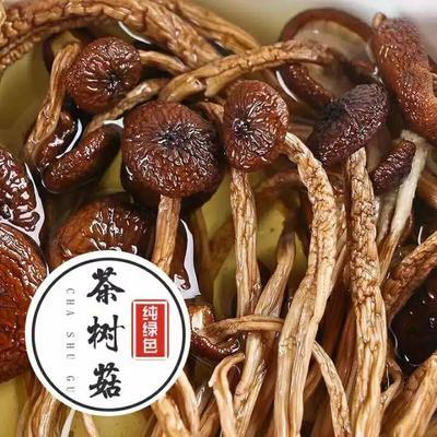 福建省三明市建宁县干茶树菇 袋装 1年