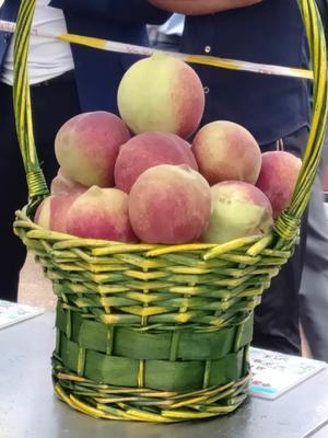 这是一张关于青州蜜桃 45mm以上 2 - 3两的产品图片
