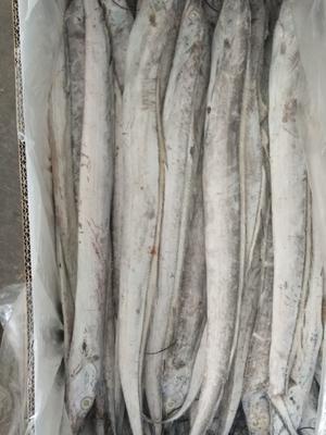 山东省滨州市滨城区东海带鱼 野生 0.5公斤以下