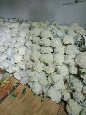 河北省邯郸市丛台区有机花菜 松散 1~2斤 乳白色