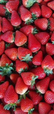 这是一张关于蒙特瑞草莓 30克以上的产品图片