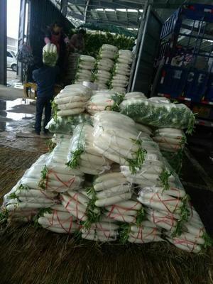 贵州省毕节市威宁彝族回族苗族自治县白萝卜 2.5~3斤