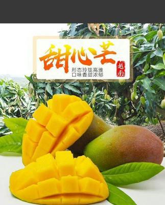 广西壮族自治区南宁市上林县台农芒 4两以上