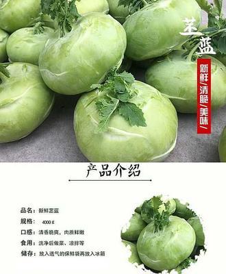天津西青区青苤蓝 1斤以上