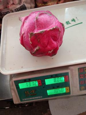 云南省玉溪市红塔区红皮红肉火龙果 特大(1斤以上)