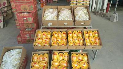 甘肃省兰州市榆中县中白木瓜 1.5 - 2斤