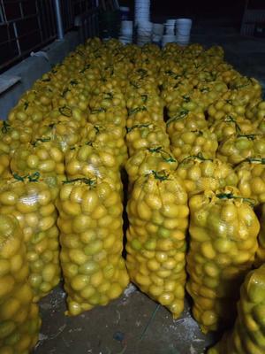 广东省广州市白云区香水柠檬 2 - 2.6两