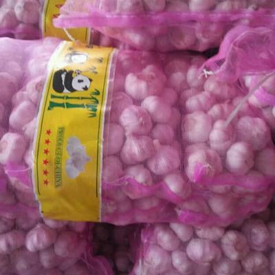 山东省济宁市金乡县紫皮大蒜 5.5-6.0cm 多瓣蒜