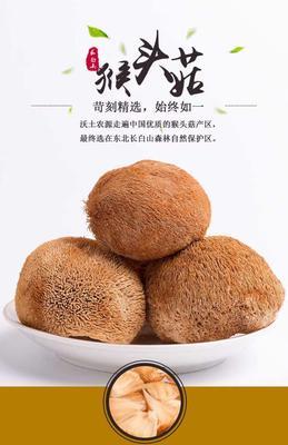 吉林省白山市抚松县野生干猴头菇 袋装 1年以上