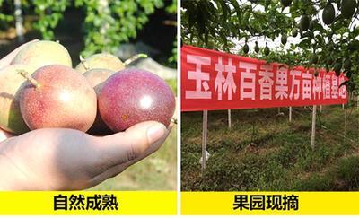 这是一张关于紫色百香果 60 - 70克 的产品图片