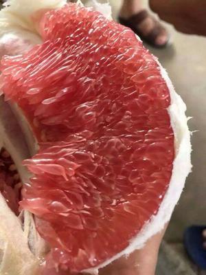 这是一张关于蜜柚 1.5斤以上的产品图片