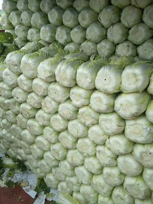 河北省保定市定州市白面青梗松花菜 适中 2~3斤 乳白色