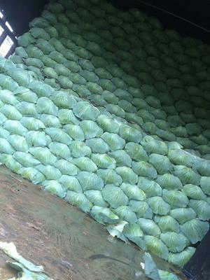 河南省开封市通许县平包 3.0~3.5斤