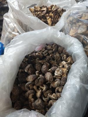 广西壮族自治区桂林市龙胜各族自治县原木干香菇 散装 1年
