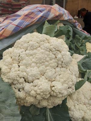 山东省淄博市高青县有机花菜 松散 3~4斤 乳白色