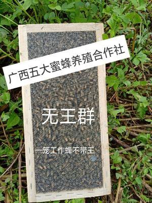 广西壮族自治区南宁市邕宁区中蜂