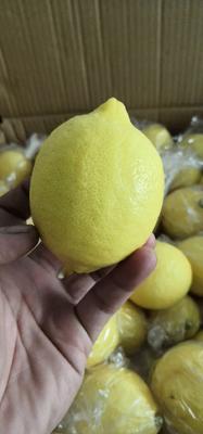 广东省广州市白云区安岳柠檬 2.7 - 3.2两