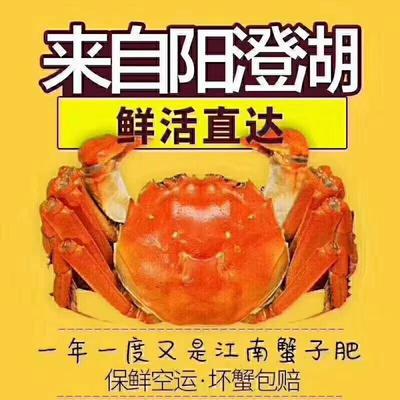 江苏省苏州市昆山市阳澄湖大闸蟹 3.5两 母蟹