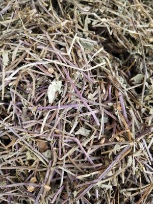 这是一张关于半枝莲的产品图片