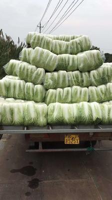江苏省苏州市吴江市秋宝白菜 3~6斤 净菜