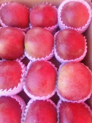 这是一张关于红富士苹果 膜袋 日晒面 60mm以上的产品图片