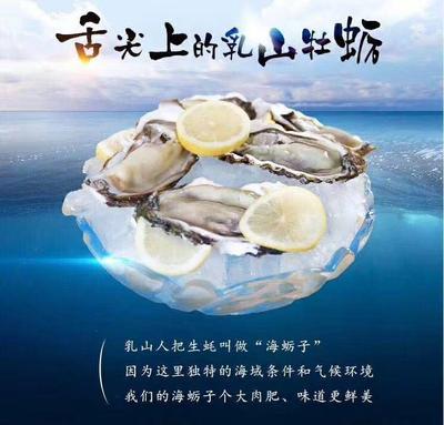 这是一张关于大连湾牡蛎 人工殖养 3-4两/只的产品图片