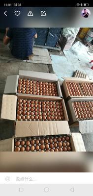 这是一张关于麻酱蛋 食用 礼盒装的产品图片