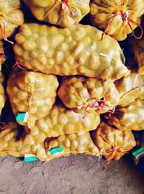 这是一张关于超荷兰15号土豆 3两以上的产品图片