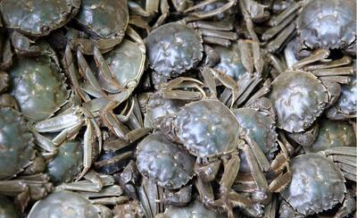 江苏省泰州市兴化市兴化大闸蟹 2.0两以下 母蟹
