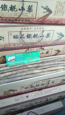 娌冲崡鐪佺劍浣滃競姝﹂櫉鍘块搧妫嶅北鑽� 70~90cm