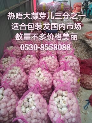 山东省菏泽市巨野县金乡大蒜 混级统货 多瓣蒜