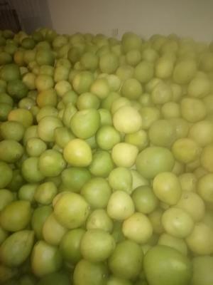 四川省成都市蒲江县红心柚 1.5斤以上