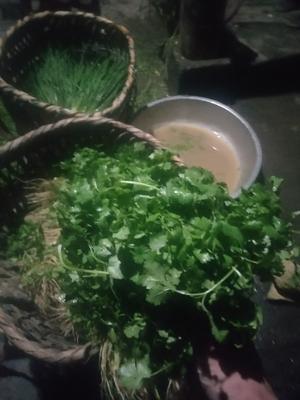 贵州省遵义市正安县早秋夏绿白菜 10~15斤 净菜