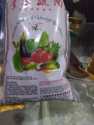 这是一张关于大叶菠菜种子的产品图片