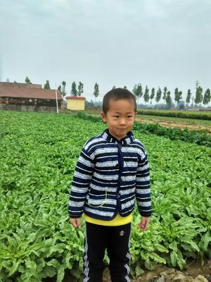 山东省莱芜市莱城区散叶生菜 1斤以上