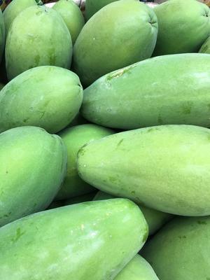 海南省海口市琼山区中白木瓜 1.5 - 2斤
