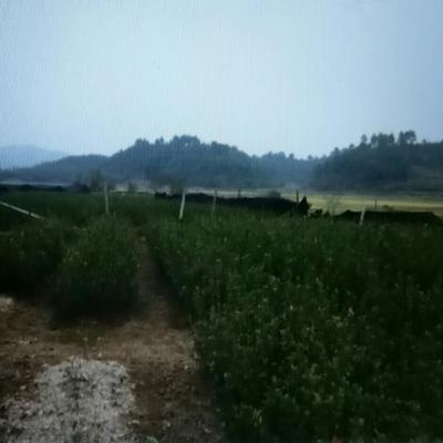 江西省吉安市安福县长林系列