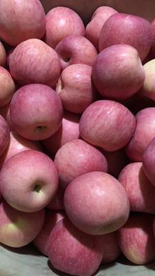 这是一张关于红富士苹果 光果 条红 85mm以上的产品图片