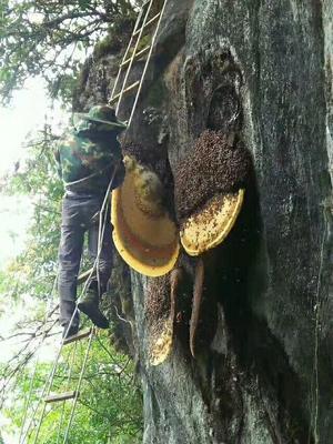 云南省文山壮族苗族自治州文山市土蜂蜜 塑料瓶装 100% 2年