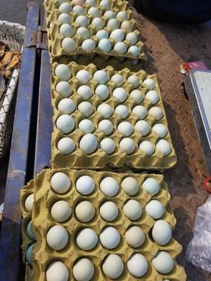 湖北省湖北省仙桃市绿壳鸡蛋 食用 散装