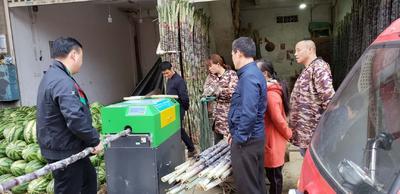 广西壮族自治区玉林市博白县黑皮甘蔗 2.5 - 3m 6 - 8cm