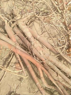 这是一张关于甘草的产品图片