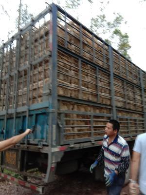 广西壮族自治区南宁市邕宁区麻鸭 公 全散养 4-5斤